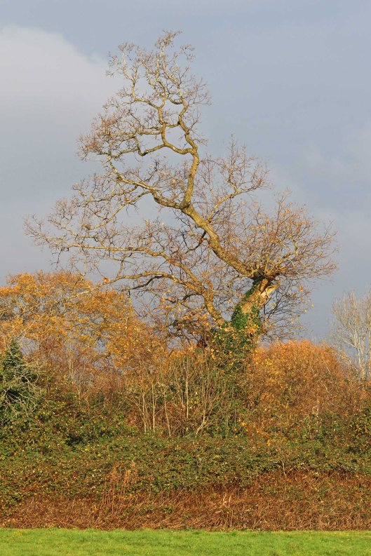 181126 national tree week