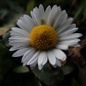 181202 daisy