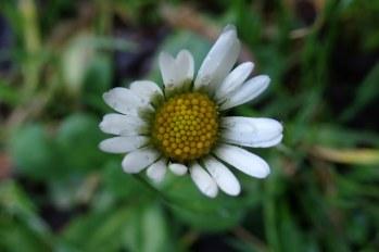 181209 daisy