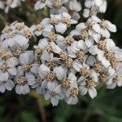181216 wildflowers (11)