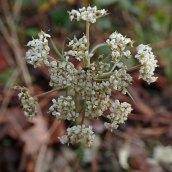 181216 wildflowers (4)
