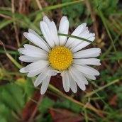 181216 wildflowers (5)