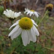 181216 wildflowers (6)