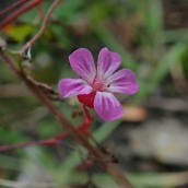 181216 wildflowers (7)