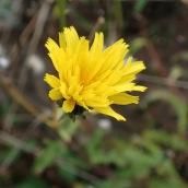 181216 wildflowers (9)