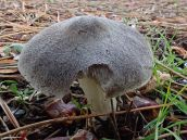 181227 fungi foray (10)