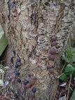 181227 fungi foray (16)