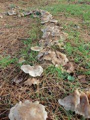 181227 fungi foray (4)