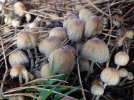181227 fungi foray (5)