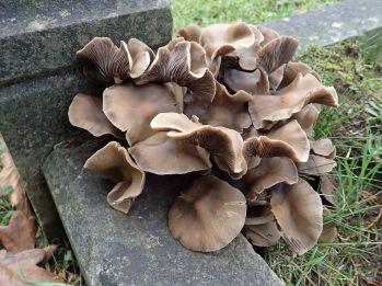 181227 fungi foray (9)