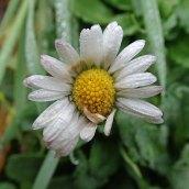 181230 daisy