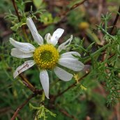 181230 mayweed maybe