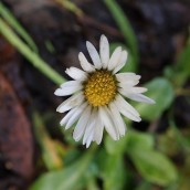 190113 daisy
