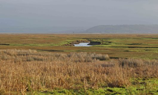 190114 (1) saltmarsh at whiteford point