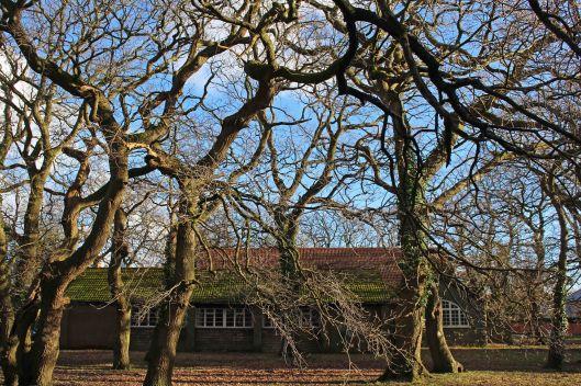 190210 oak trees