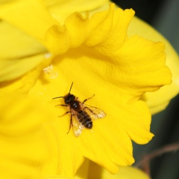 190226 bee (1)