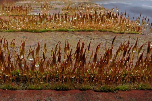 190303 moist moss