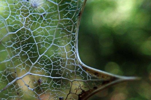 190309 leaf skeleton