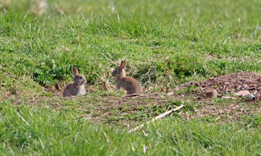 190403 bunnies (2)