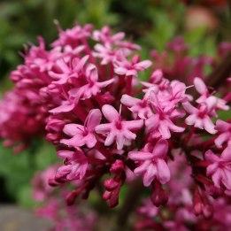 190508 wildflowers (4)
