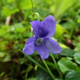 190508 wildflowers (6)