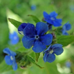190508 wildflowers (7)