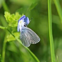 190513 small blue