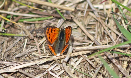190515 small copper