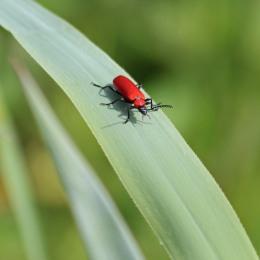 190522 beetle