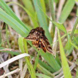 190528 burnet companion (2)