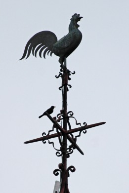 190530 blackbird on spire (2)
