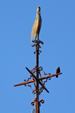 190530 blackbird on spire (4)
