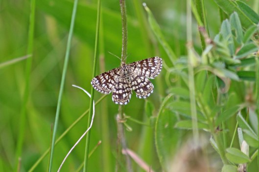 190531 latticed heath