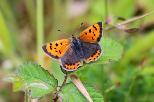 190617 small copper