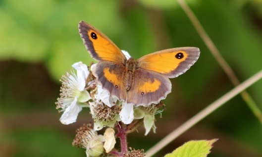 190721 gatekeeper female