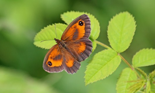 190721 gatekeeper male