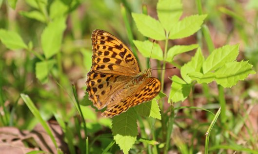 190726 silver-washed frit