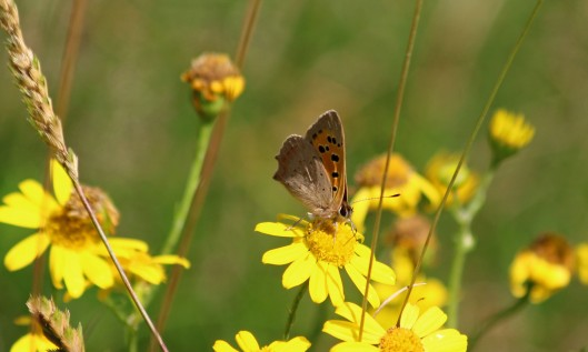 190726 small copper