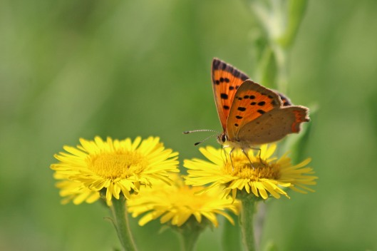 190803 small copper