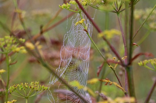 190827 wet webs (1)