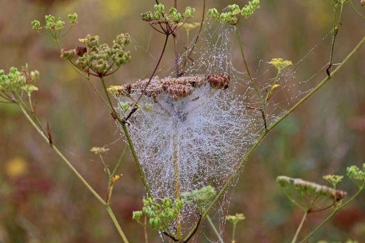 190827 wet webs (2)
