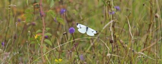 190907 large white (1)