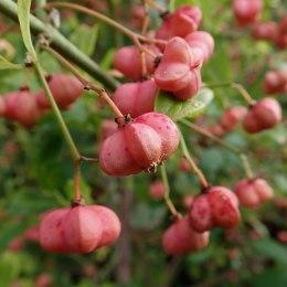 190927 berries (3)