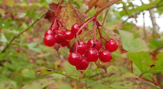 190927 berries (7)