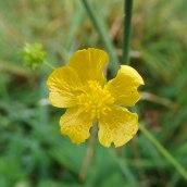 190928 wildflowers (12)