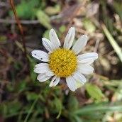 190928 wildflowers (15)