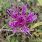 190928 wildflowers (16)