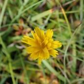 190928 wildflowers (18)