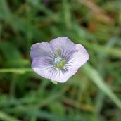 190928 wildflowers (19)