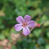 190928 wildflowers (2)